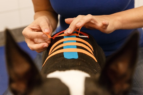 kinesiology-taping-course-canine